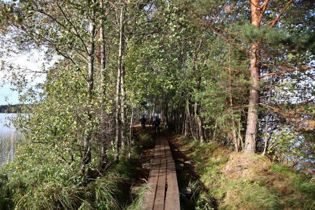 Liesjärven kansallispuisto / Kyynäränharju