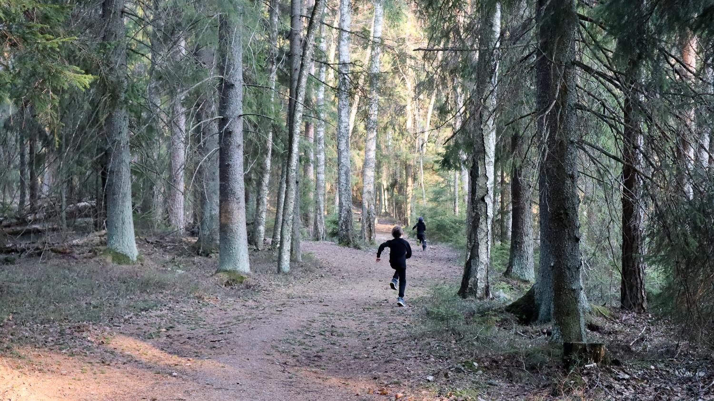 Liesjärven kansallispuisto / Ruskovilla