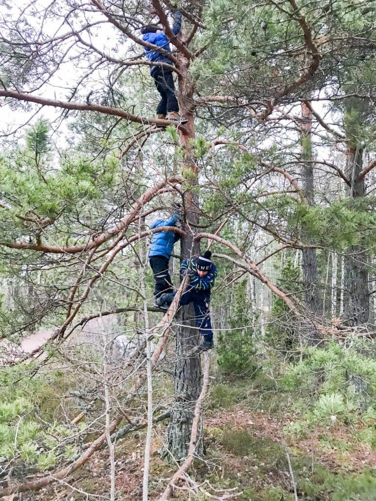 Kiipeilyä puihin