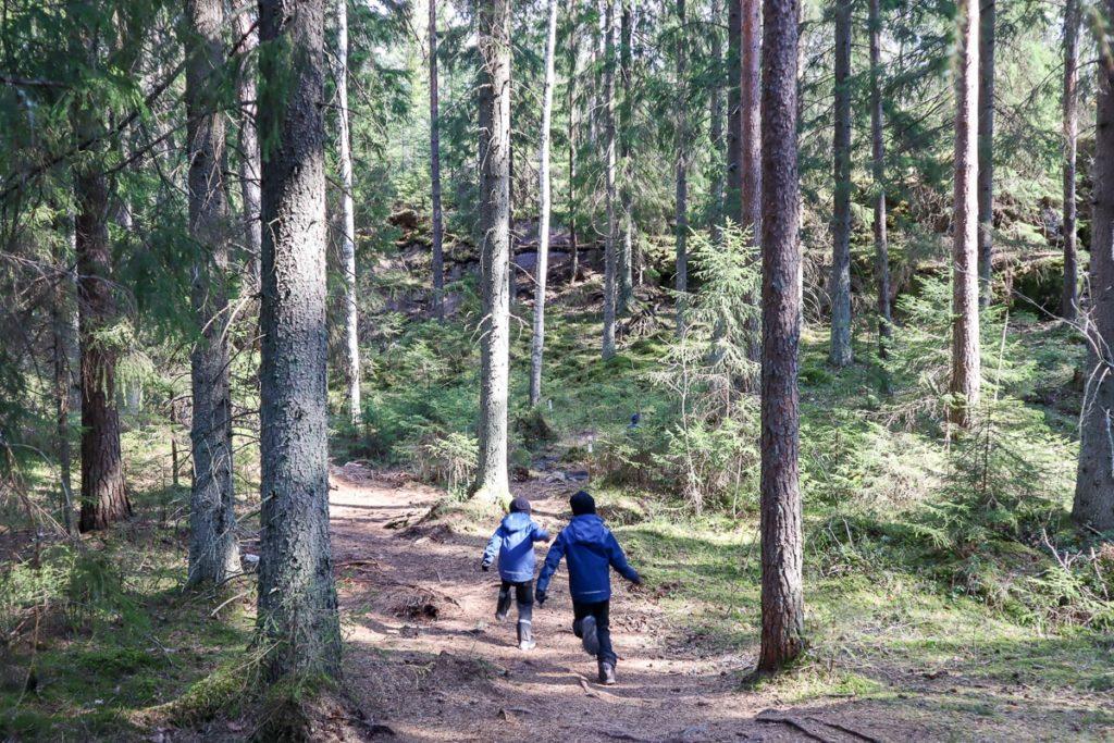 Metsäretki / Nuuksio