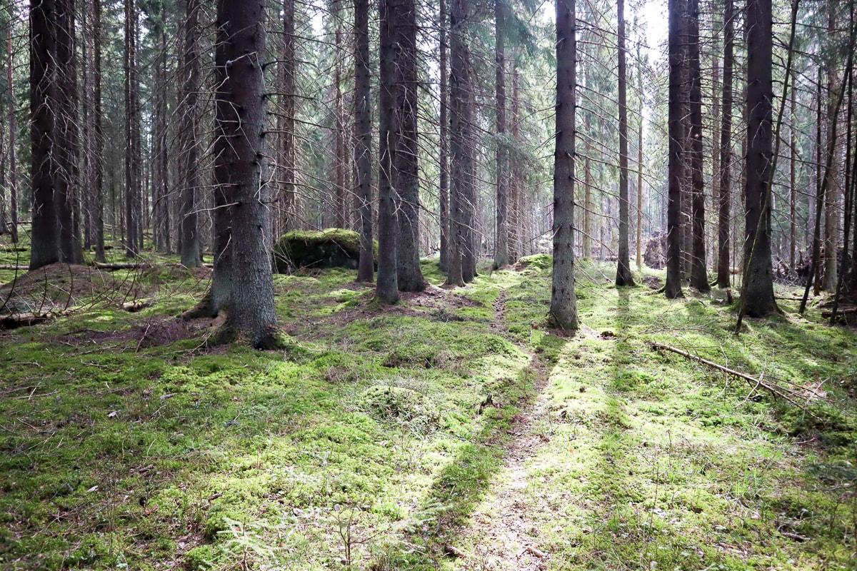 Onkimaanjärvi – Tunnetko tämän pienen retkikohteen Uudenmaan rajalla?