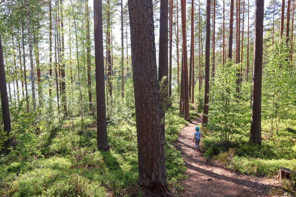 Meidän metsä -luontopolku Tammelan Ruostejärvellä