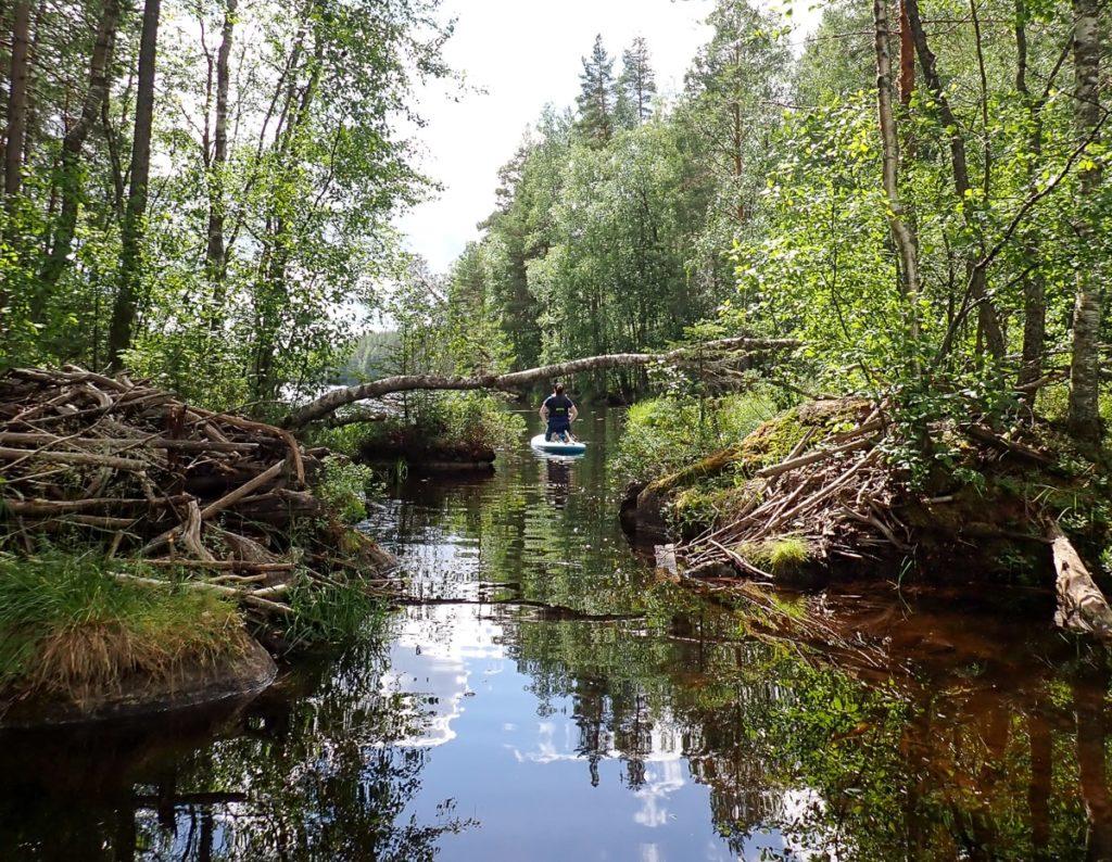 Majavien elinalue / Etelä-Konneveden kansallispuisto