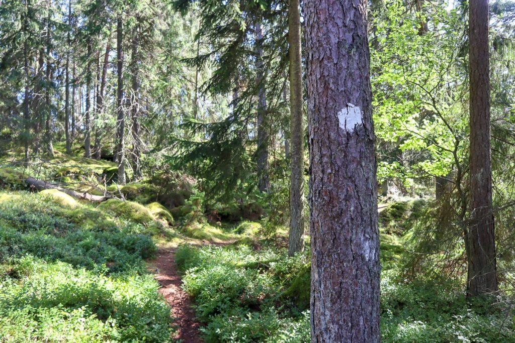 Opasmerkki puussa