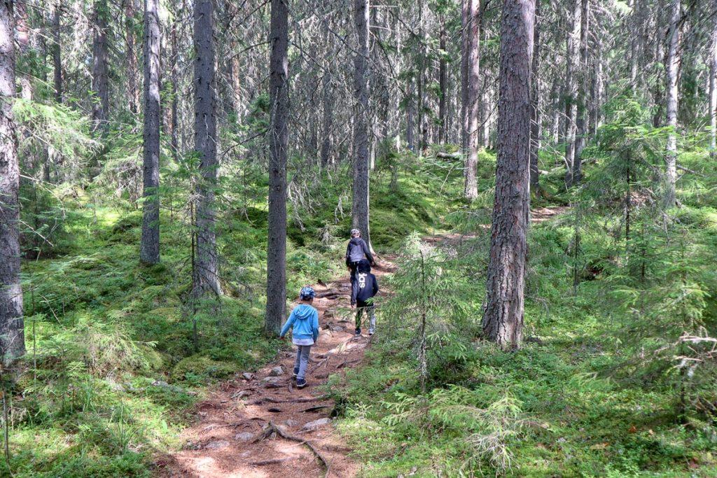 Heretyn luontopolku / Isojärven kansallispuisto