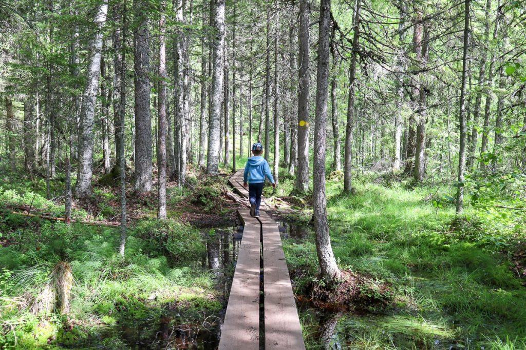 Pitkospuilla Etelä-Konneveden kansallispuistossa