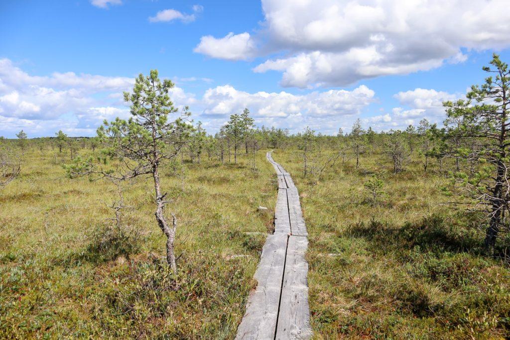 Kirveslammen kierros / Leivonmäen kansallispuisto