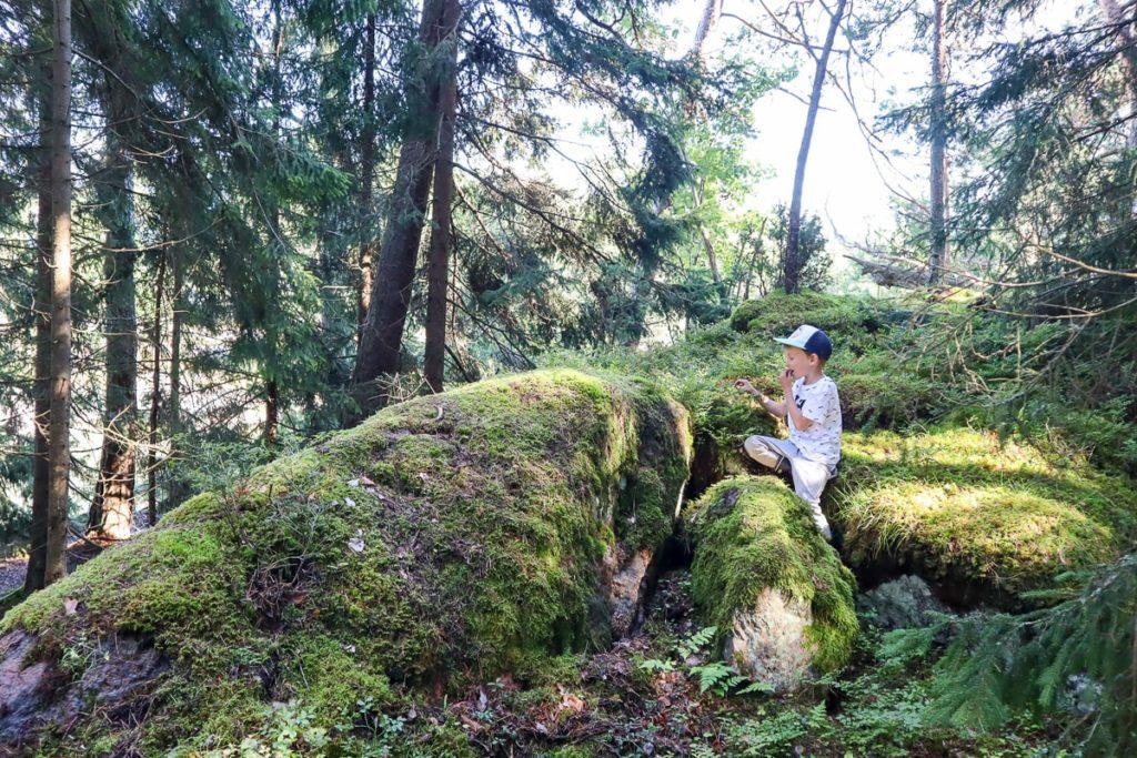 Lähteelän metsissä