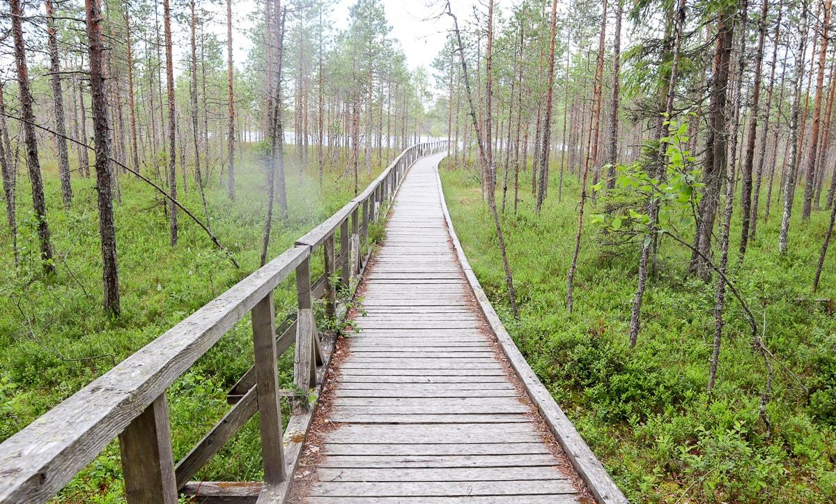 Luupään lenkki – esteettömyyttä ja jääkauden jälkiä Leivonmäen kansallispuistossa