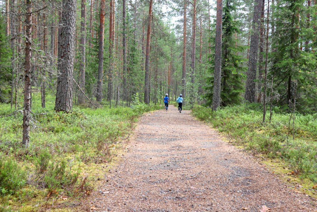 Harjujärven esteetön reitti / Leivonmäen kansallispuisto