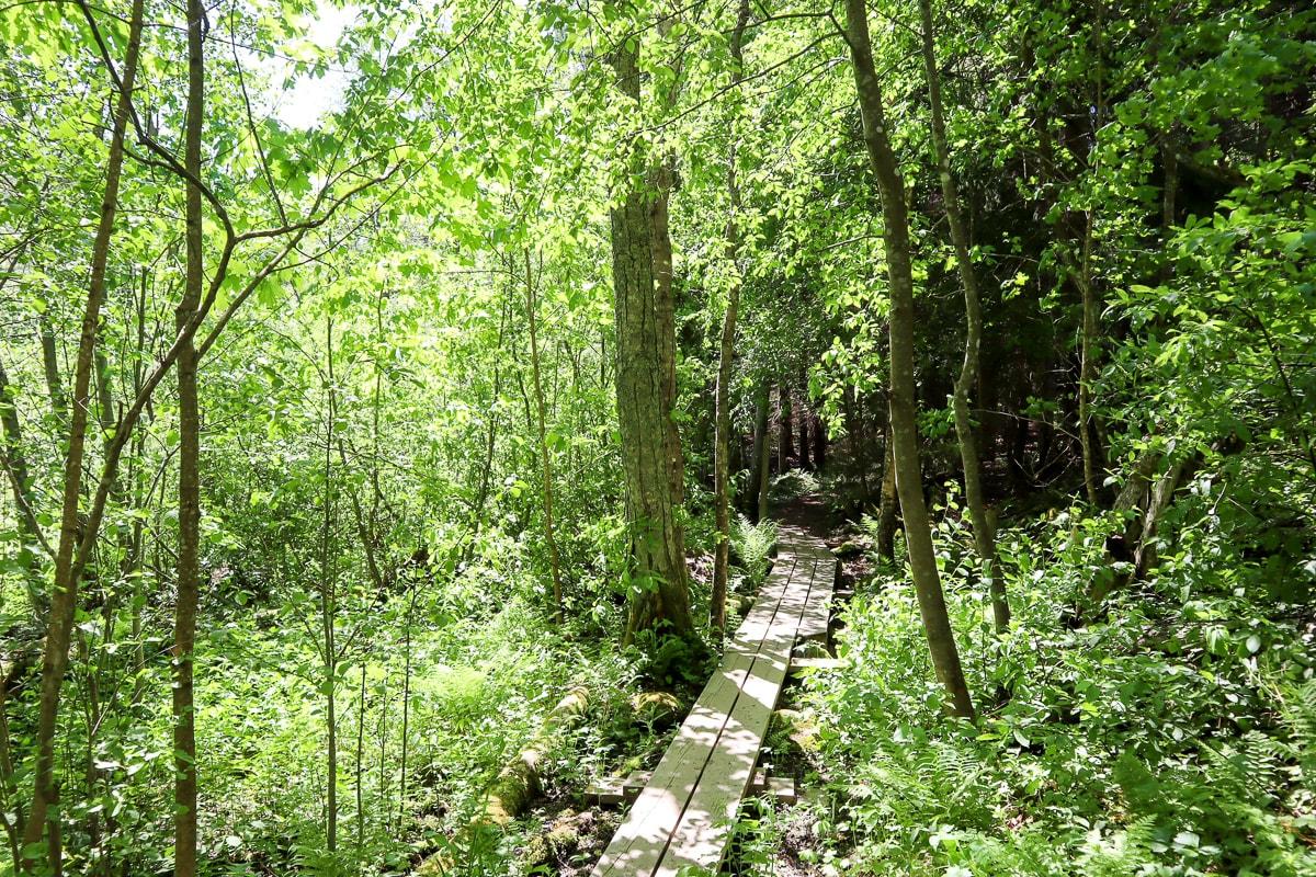 Oittaan luontopolku – rauhallinen keidas aktiivisen ulkoilualueen kupeessa